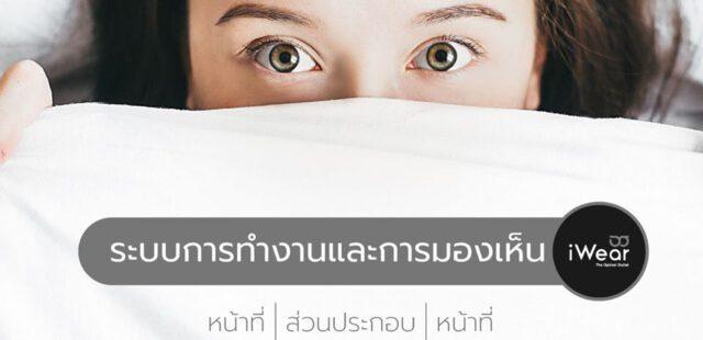 ดวงตา ช่วยให้เรามองเห็นสิ่งรอบตัวได้อย่างไร